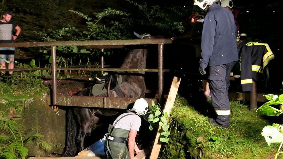 Es war ein zeitintensiver Einsatz doch nach über einer Stunde so hoch, dass die Stute den Absatz zwischen Unterbau und Brückenkante erklettern konnte.