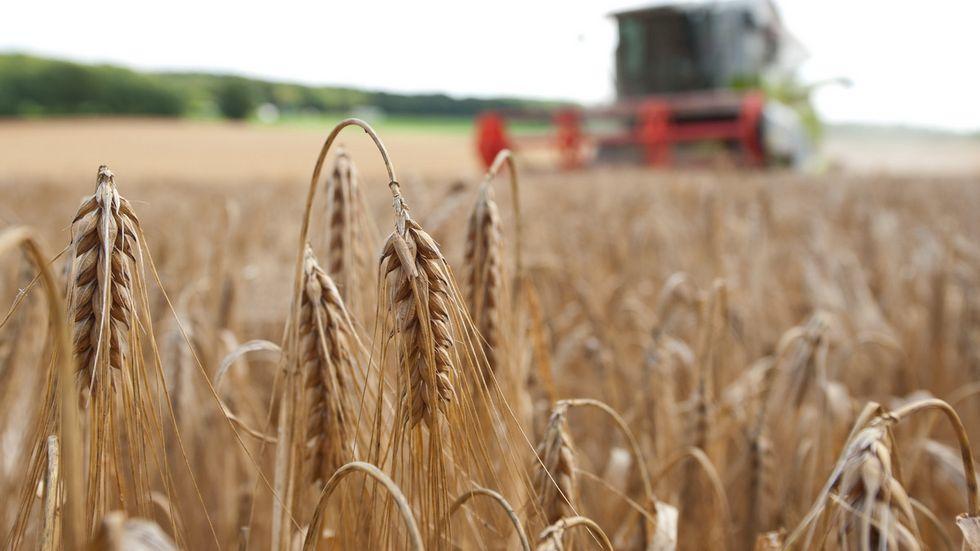 Landwirt bei der Ernte (Symbolbild)